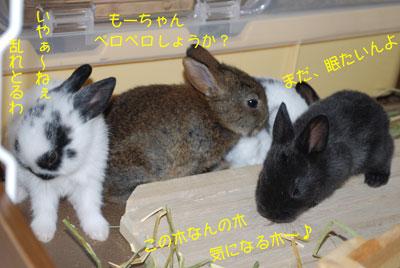DSC_0098_20080923220940.jpg