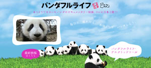 pandafullife.jpg