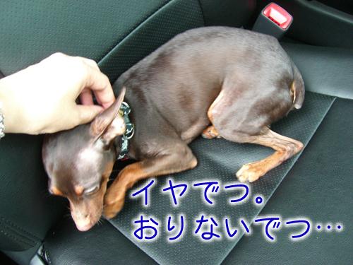 basshi1.jpg