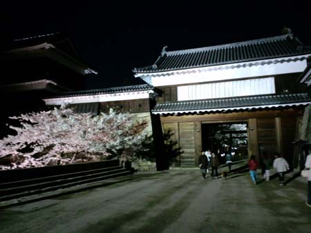 上田城桜ライトアップ1