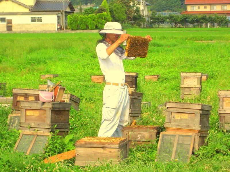 山田養蜂場+2009-06-27+16-06-05+1600x1200