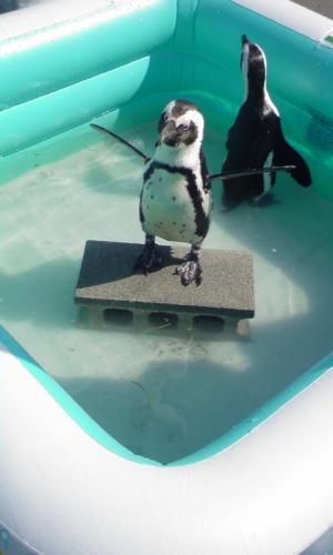 0606ペンギン