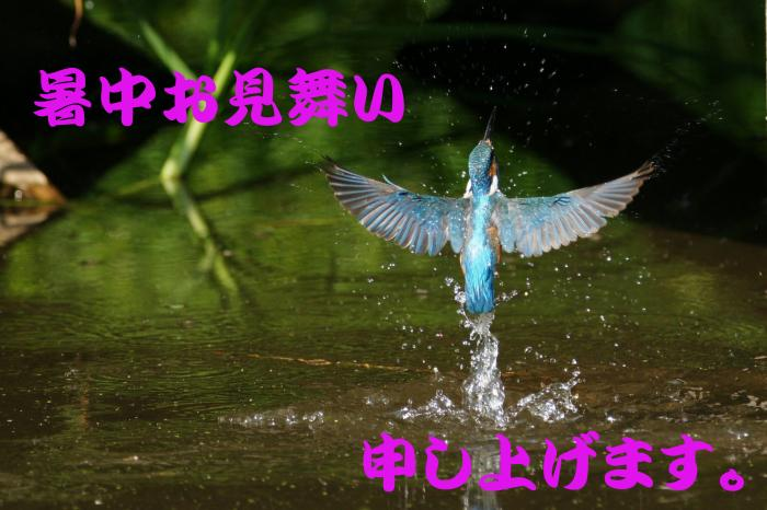 summer_Card