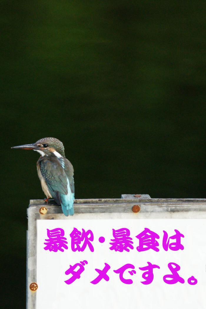 summer_Card_1
