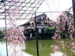 平安・池から見た