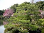 平安神宮・橋からみた松と桜