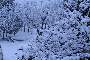 雪景色だよ