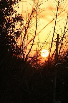 真冬の夕日