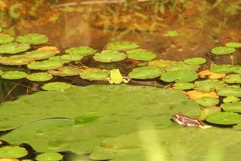 アオ蛙とのツーショット