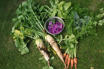 自慢の畑のお野菜