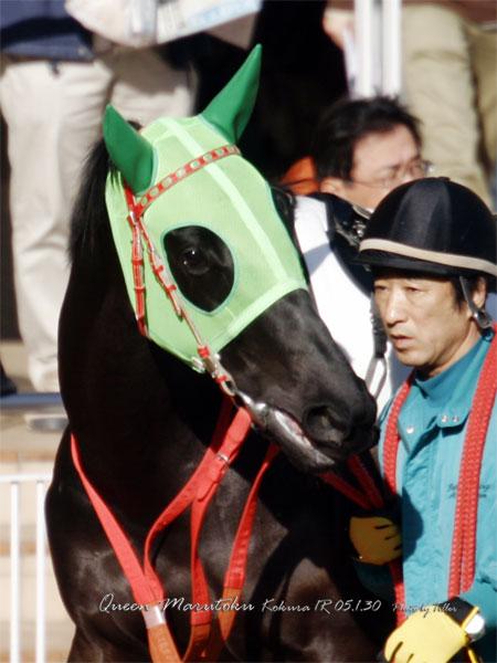QueenMarutoku513001_3048faH