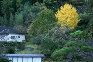 20101130icyou.jpg