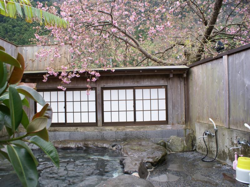 rotensakura20100211104224.jpg