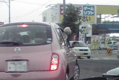 犬が運転?
