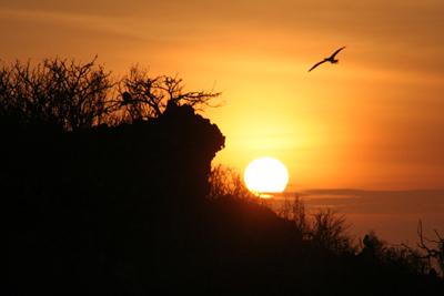ガラパゴスの夕日