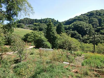 長閑な田舎の景色