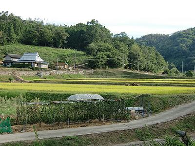 実りの秋~里山の風景~
