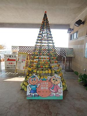 柑橘系タワー