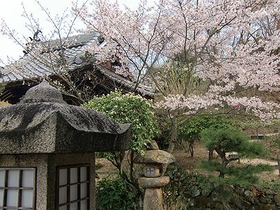 福泉坊の鐘つき堂とソメイヨシノ