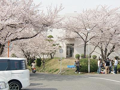 近畿中国四国農業研究センター(中国農試)花見