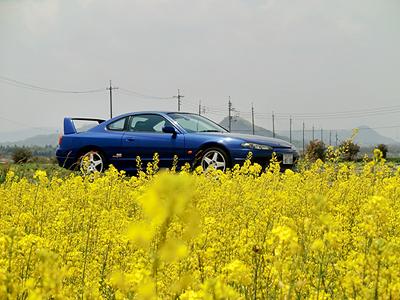 菜の花とS15