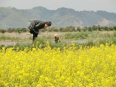 犬と散歩中のおばさん