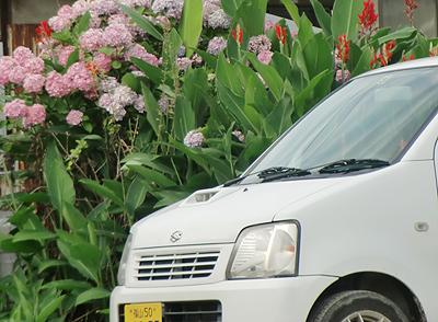 紫陽花と車