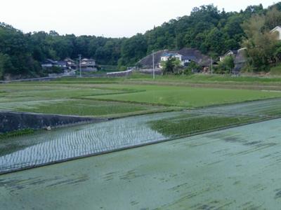 本郷町田園風景