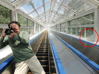 全長68mのエスカレーター:エスカヒル鳴門-上り
