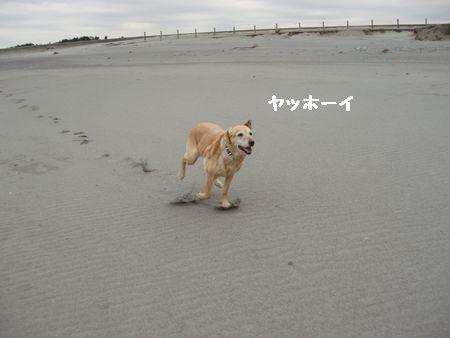 はなちゃんと一緒に走りたい。