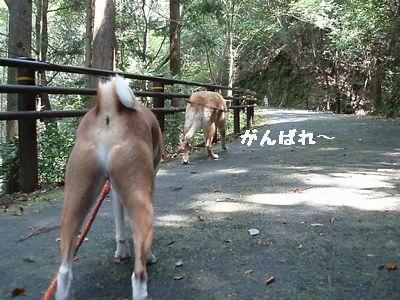 今度は歩くよ。