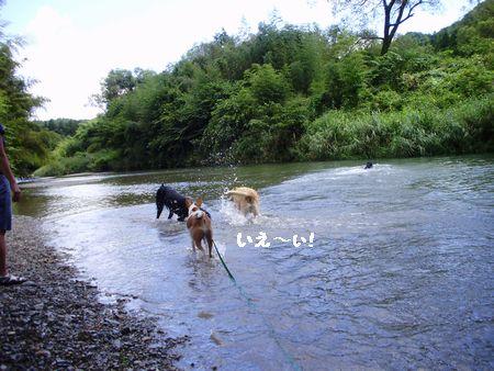 ワラワラと川遊び。