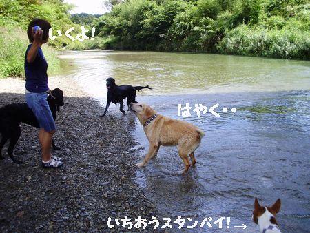 川にきったらお約束のボール投げ。