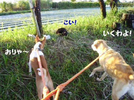 お嫁さんと豆台風が遊びに来ます。