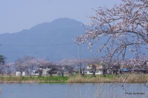 桜と比叡山