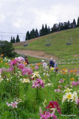 箱館山ゆり園2