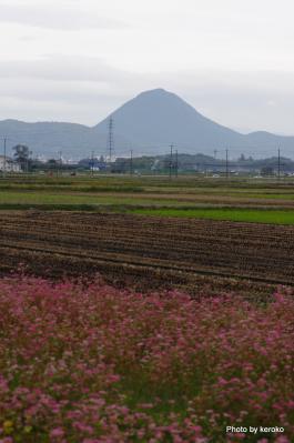 近江富士と赤ソバ畑