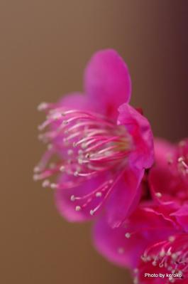 旧竹林院盆梅展4