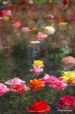 ベゴニアの池