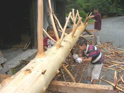 枝付き檜丸太