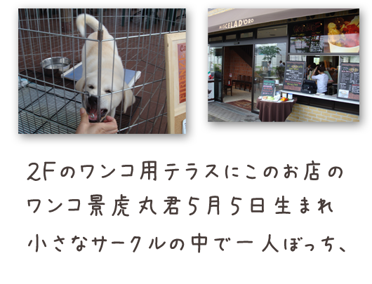20080817-04.png