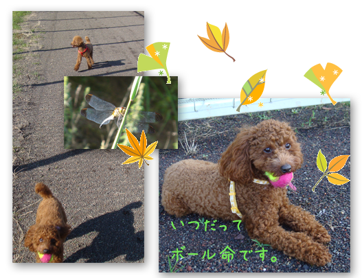 20080903-02.png