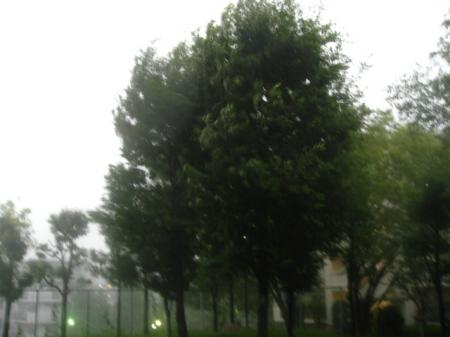 7+September+2008 the storm