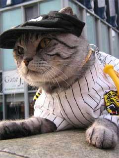 ネコだけどトラ。