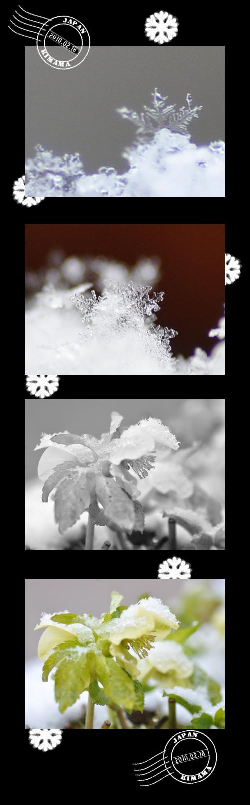 2月20日雪
