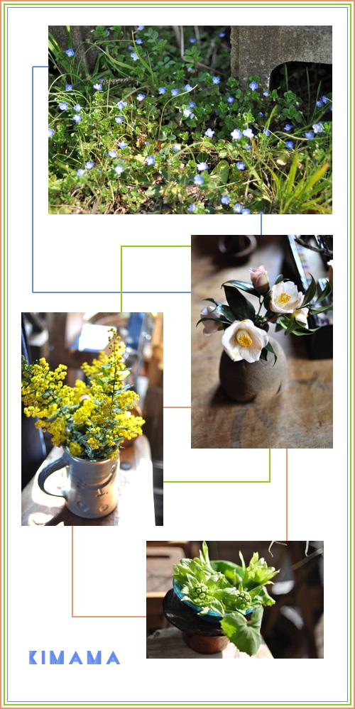 2月26日可愛い花