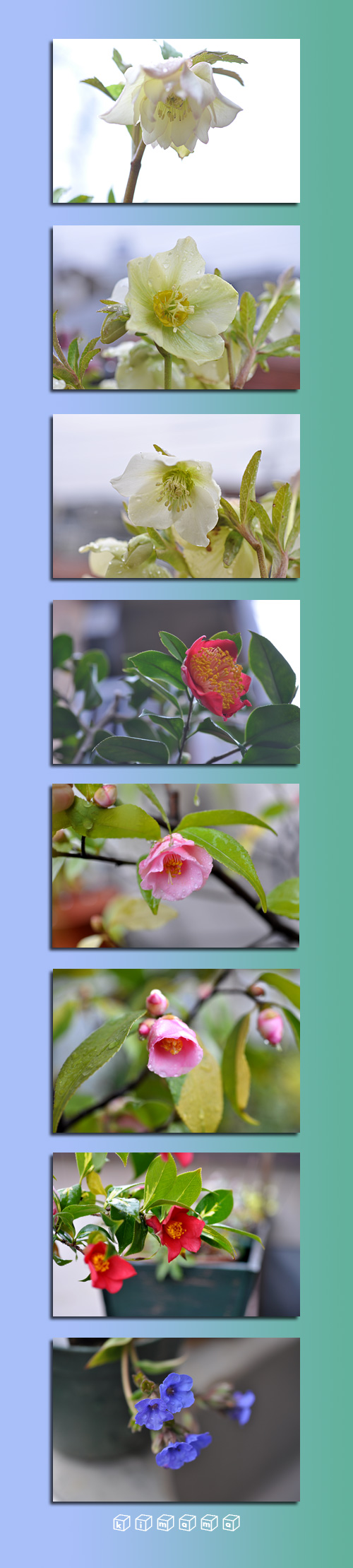 2月27日庭の花2