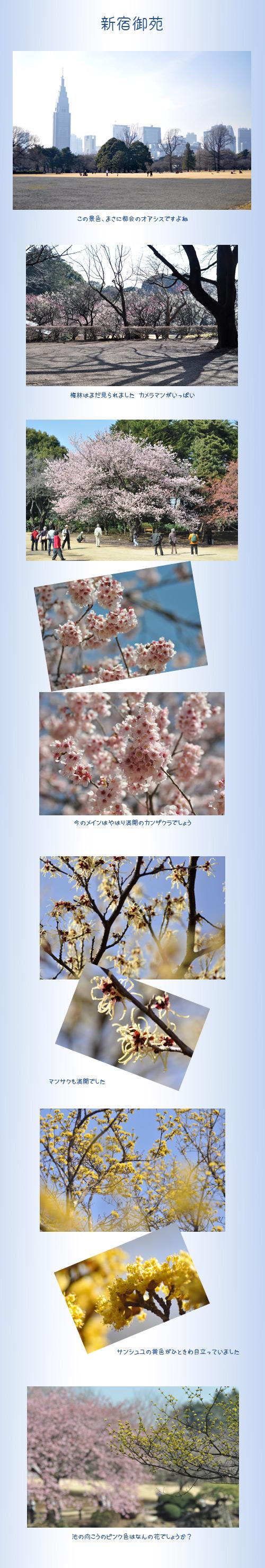 3月6日新宿御苑1