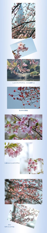 3月6日新宿御苑2