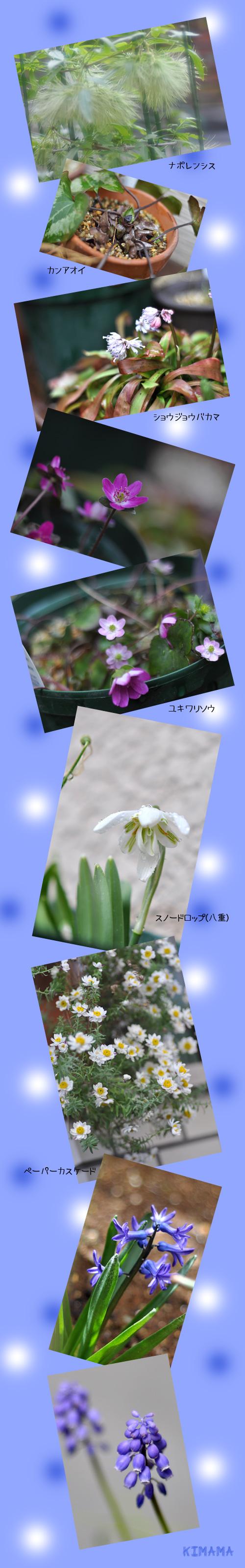 3月22日山野草